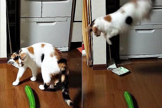 Perché I Gatti Hanno Paura Dei Cetrioli Tpi
