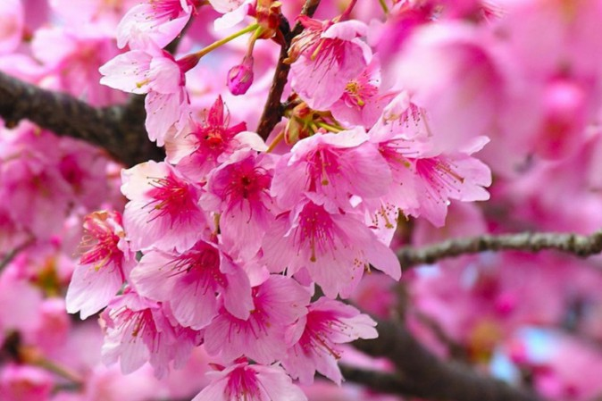 inizio primavera
