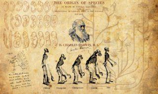 Bandita la teoria dell'evoluzione di Darwin nelle scuole turche