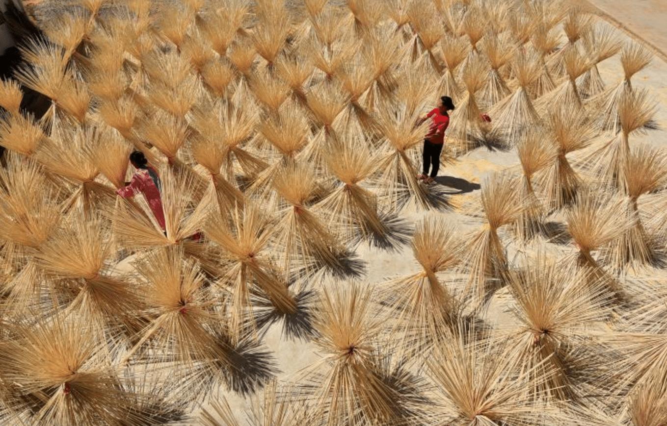 fabbrica bamboo cina