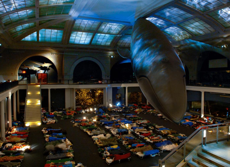 Il museo americano di Storia Naturale permette a giovani visitatori tra i sei e i 13 anni di dormire sotto la famosa balena blu