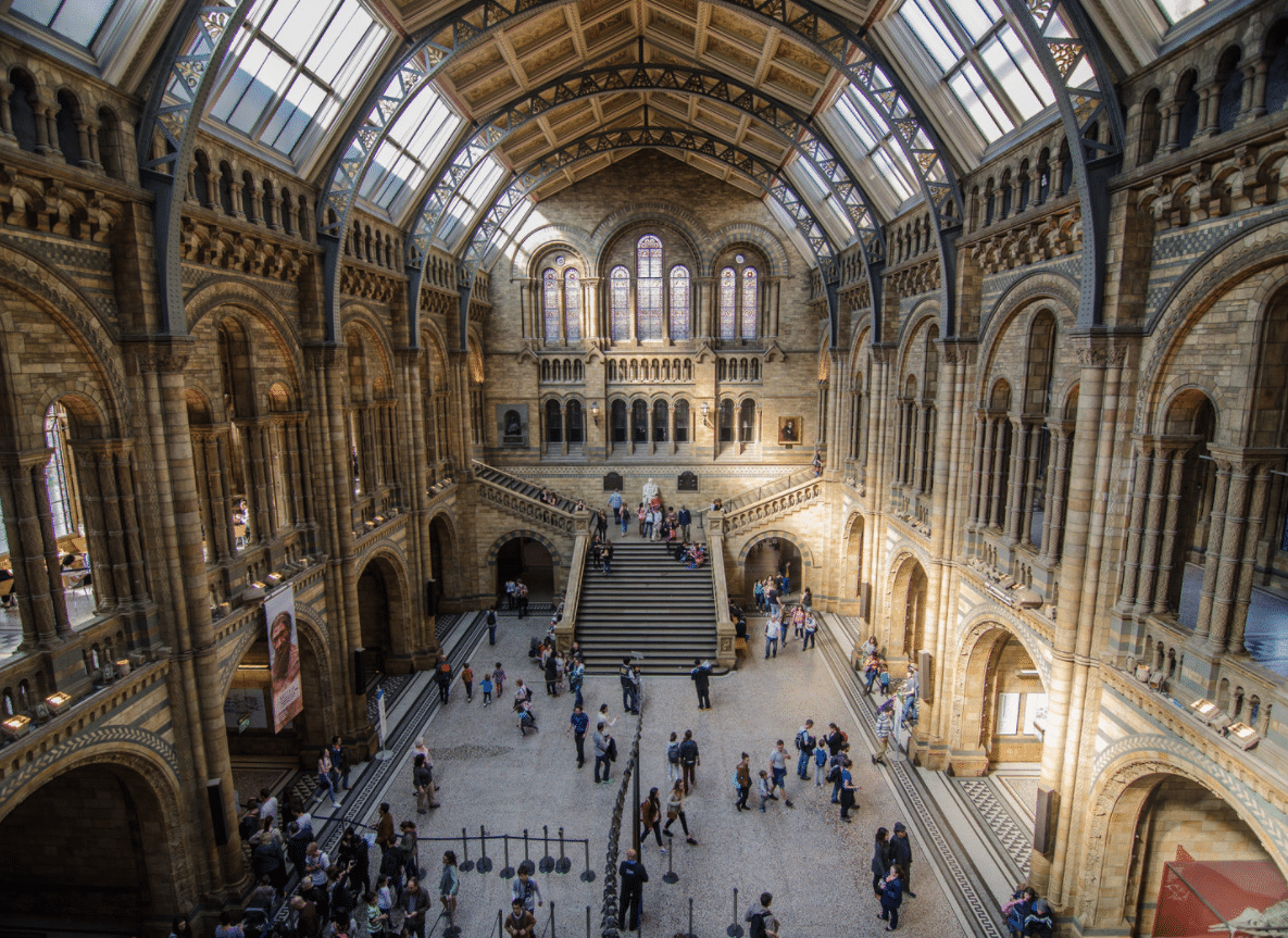 Il museo di Storia naturale di Londra permette infatti di passare la notte tra le proprie sale, all'insegna della musica, del cibo e della divulgazione scientifica