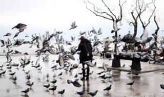 Un gruppo di piccioni in una strada di Barcellona