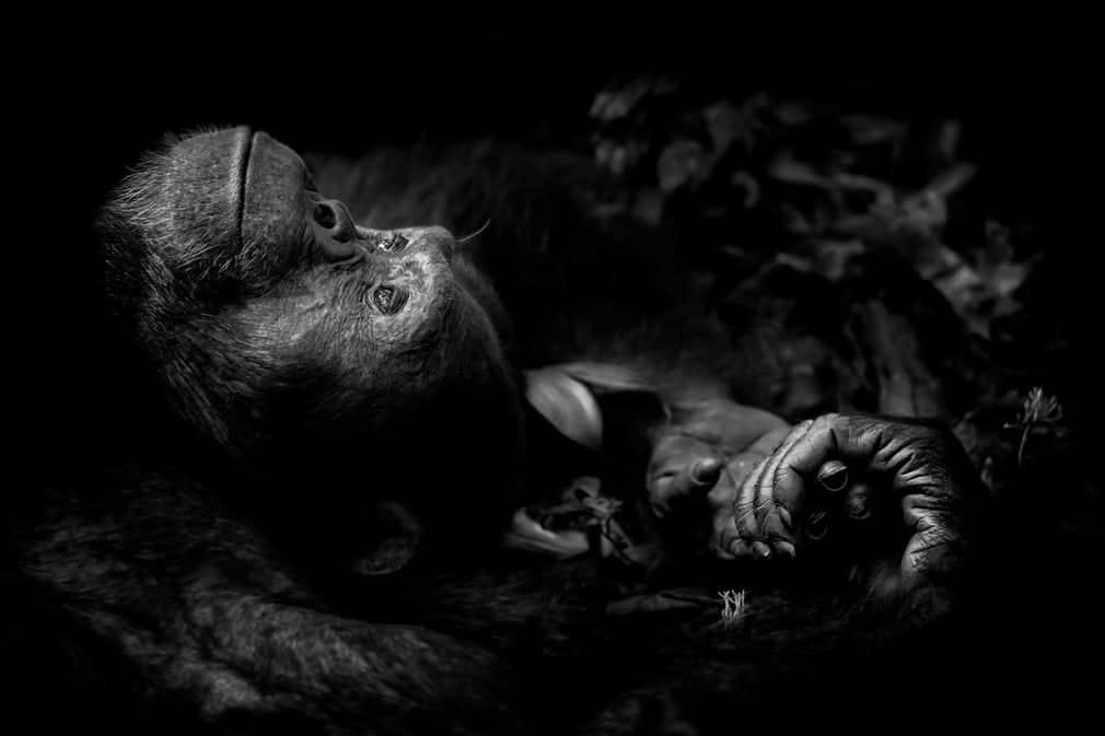 vincitori Wildlife Photographer Year 2017