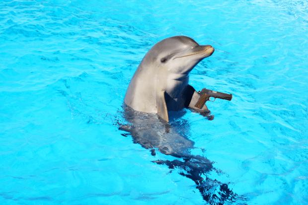 delfino, violento