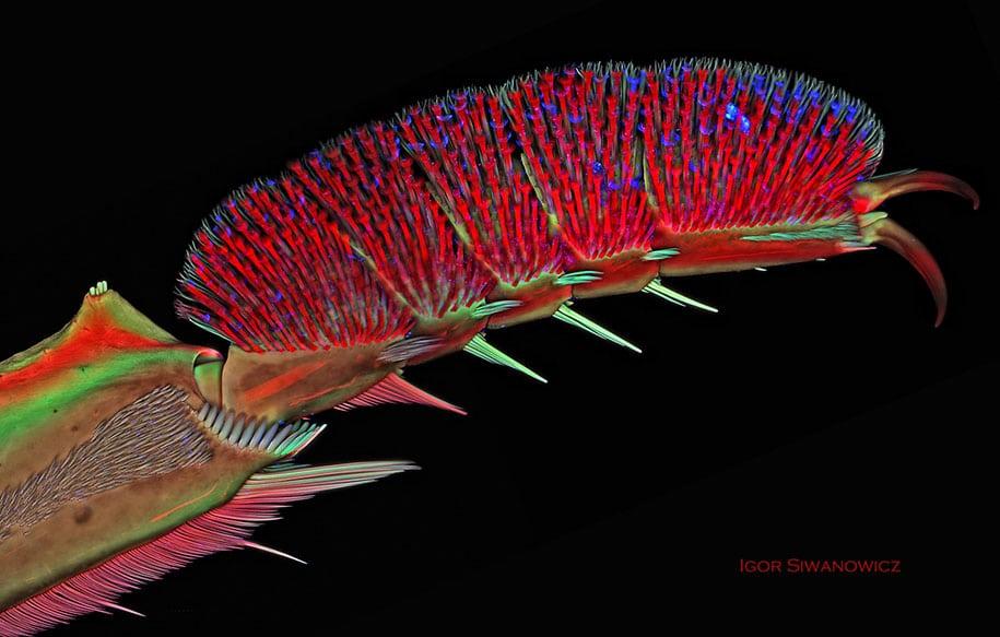 piccole creature, microscopio a scansione laser