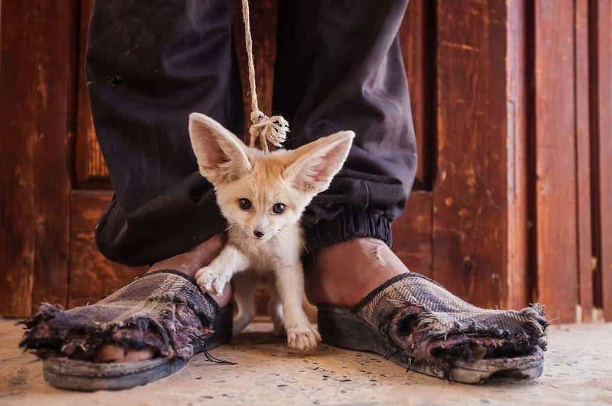 traffico animali