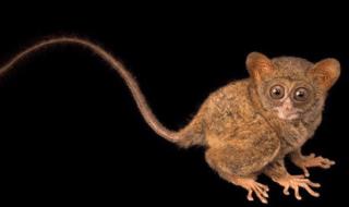 animali-rischio-estinzione
