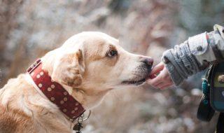 5 mete Pet Friendly per viaggiare