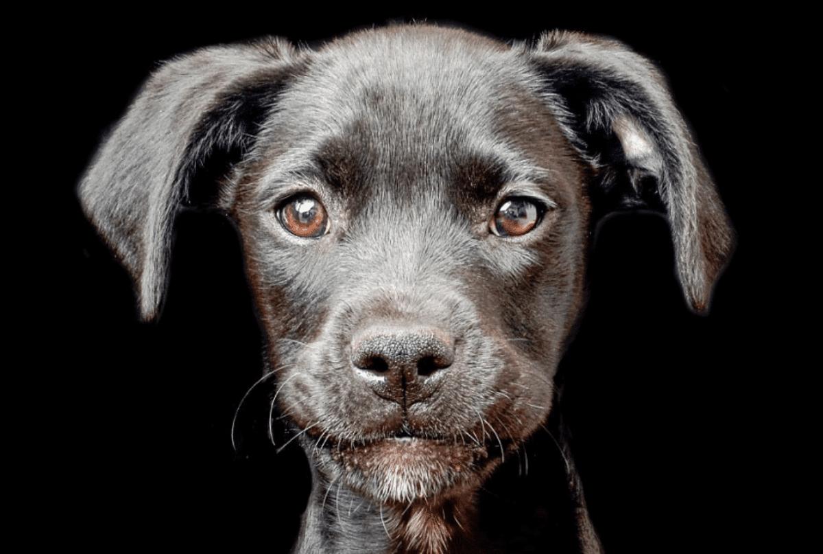 Presto cani e gatti potrebbero parlare la nostra lingua