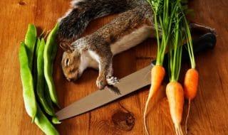 scoiattoli londra