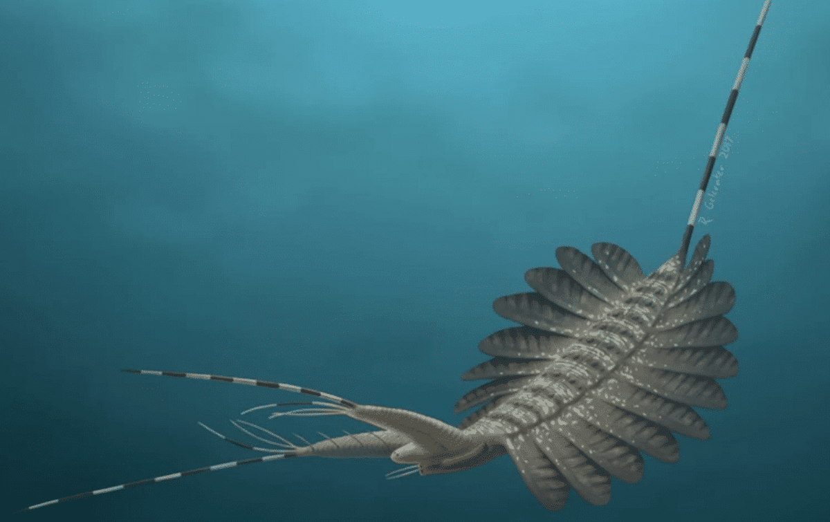 groenlandia fossili mostri marini