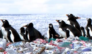 video bufala wwf pinguini isola plastica