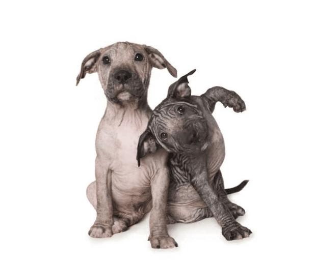 bellezza cani abbandonati adottati