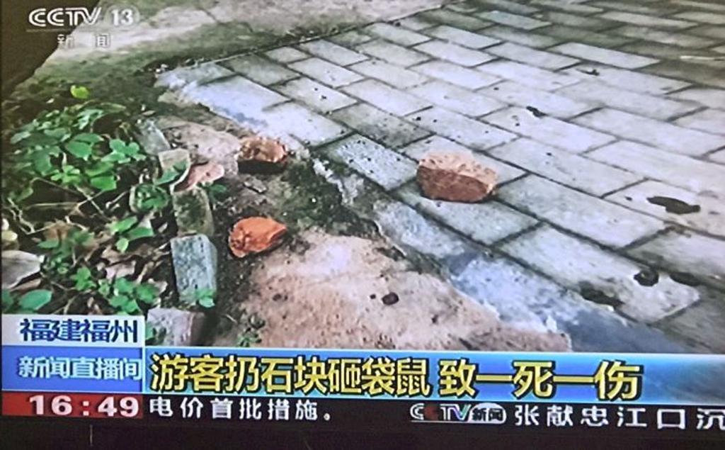 canguro mattoni ucciso zoo