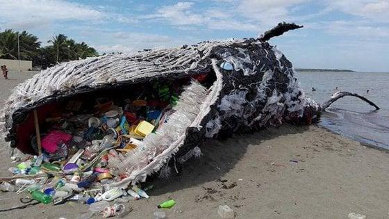 capodoglio morto 29 chili plastica