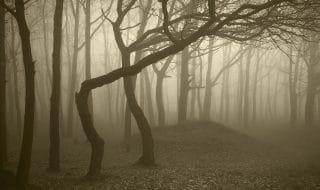 foreste inquietanti