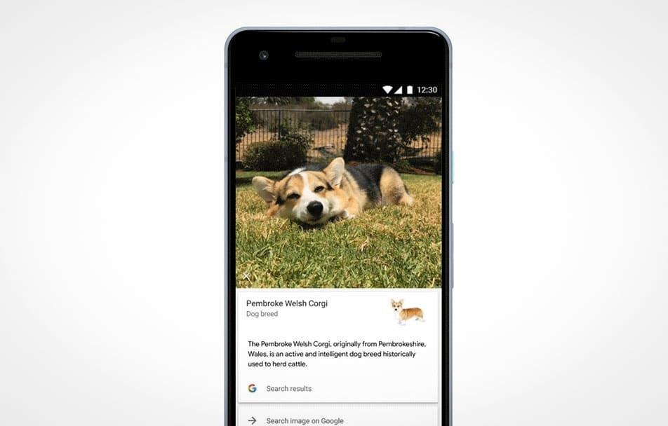 google foto riconosce razza cani gatti