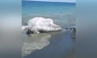 mostro marino filippine