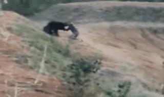 india sbranato orso selfie