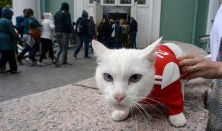gatto achille mondiali 2018