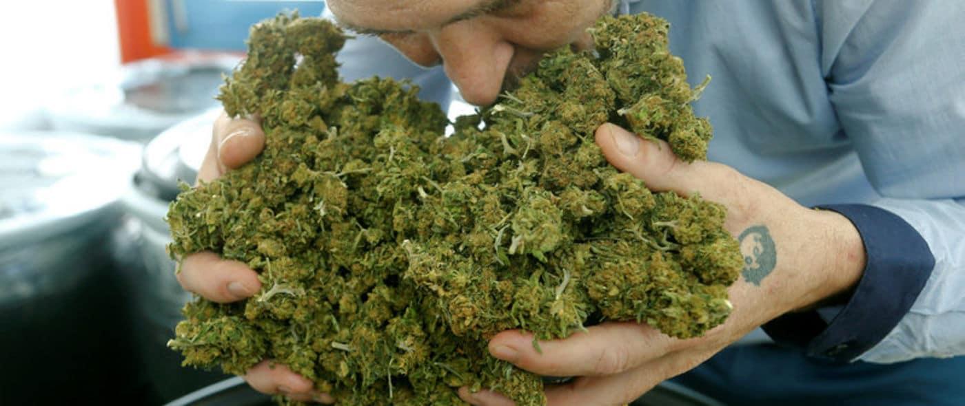 cannabis light consiglio superiore sanità