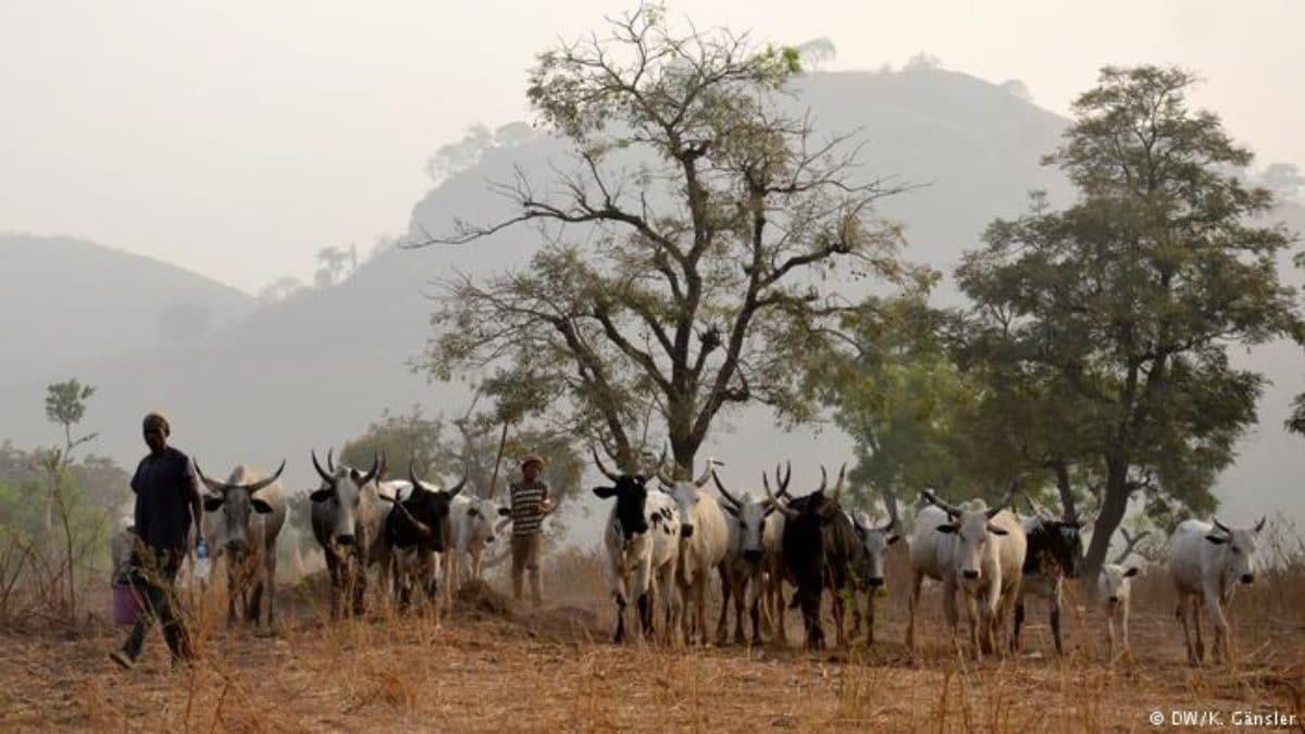 nigeria scontri pastori