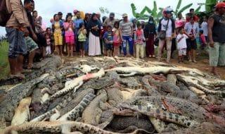 Strage coccodrilli Papua