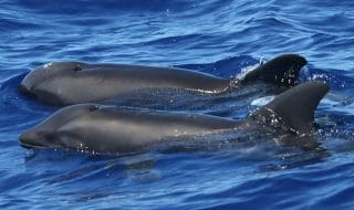 balena delfino scoperta
