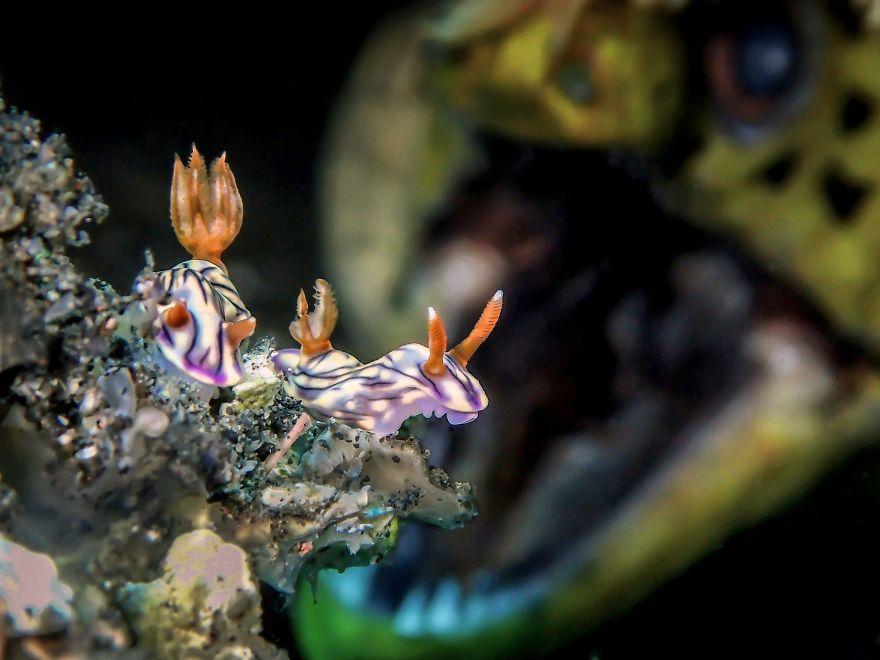 concorso foto subacquee