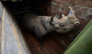 rinoceronti neri morti kenya