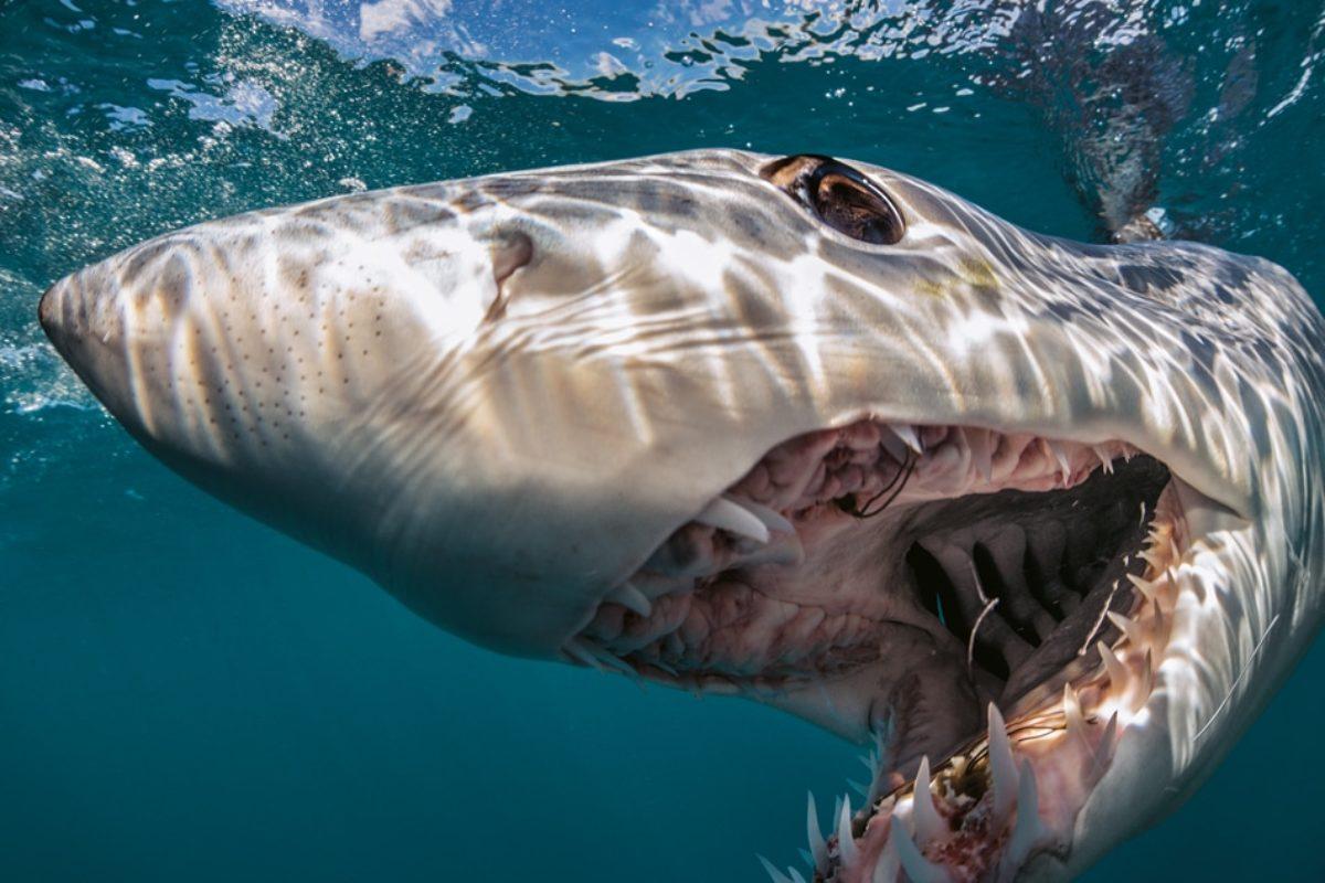 squalo stati uniti