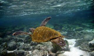 Galapagos assicurazione medica