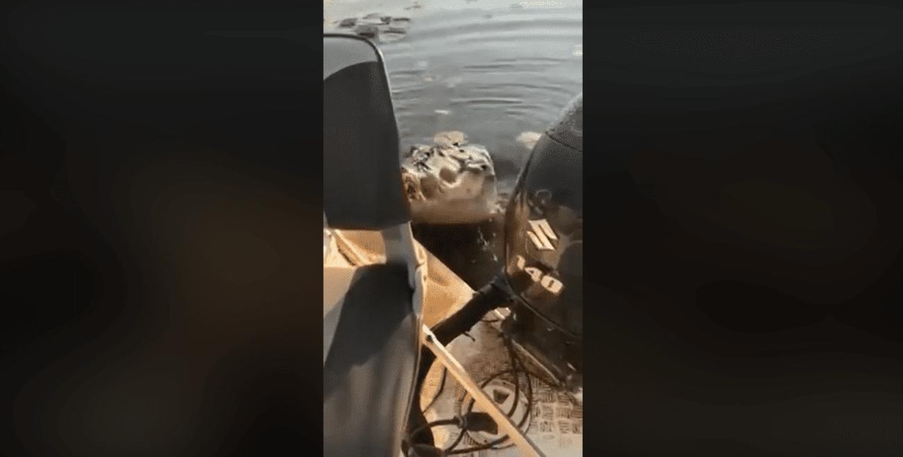 coccodrillo attacco pescatori barca