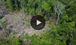 tribu amazzonica drone video