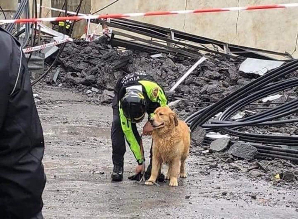 cane estratto dalle macerie