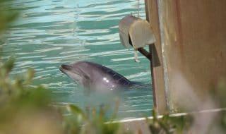 giappone acquario chiuso