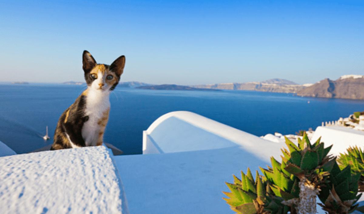 gatti isola greca lavoro