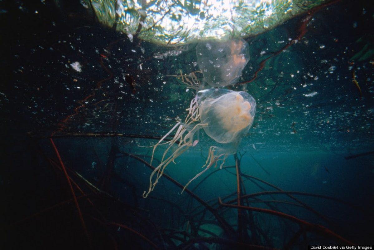 bambina italiana medusa filippine