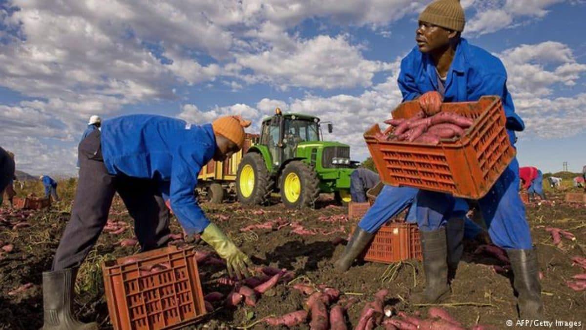 apartheid contadini bianchi sudafrica trump