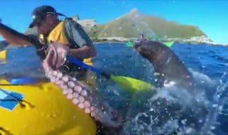 Attacco foca polpo video