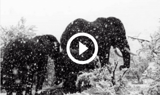 elefanti neve sudafrica