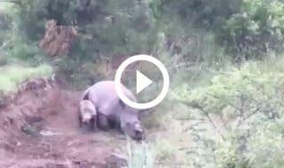 cucciolo rinoceronte madre uccisa