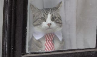 assange gatto
