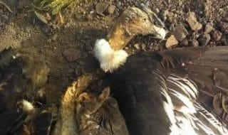pesticidi condor argentina