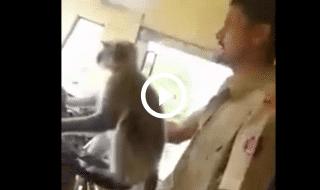 video scimmia autobus