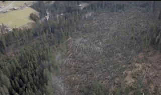 maltempo coldiretti alberi distrutti