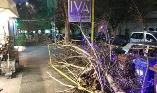 roma alberi caduti natale