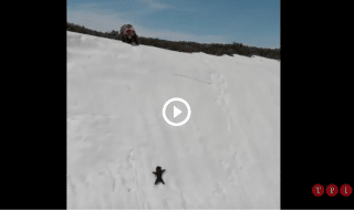 cucciolo orso video virale