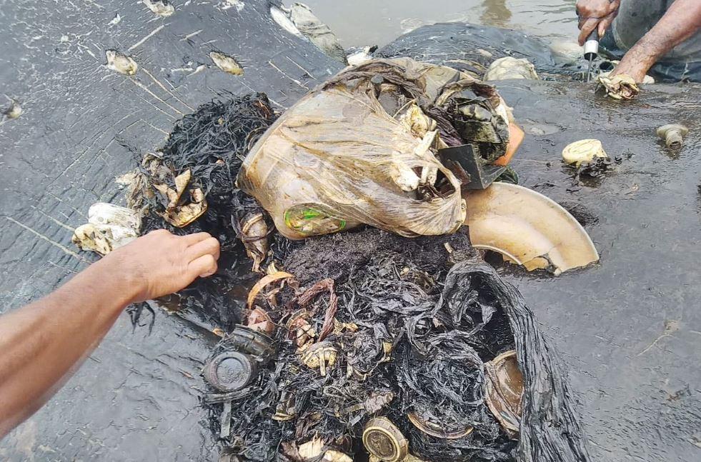 La balena che muore con 6 chili di plastica nello stomaco